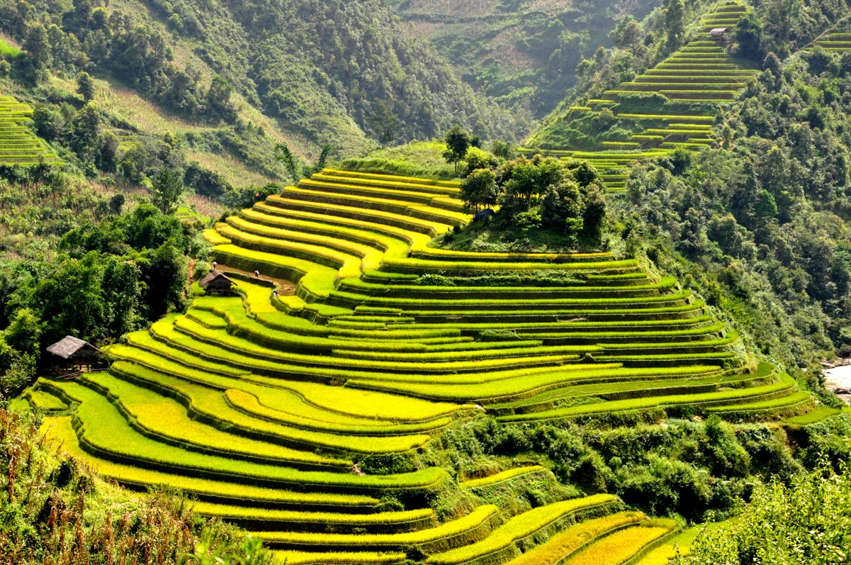 Scenic mu cang chai travel information for vietnam from for The terraces 2