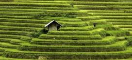 vietnam mosaic of constrast