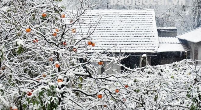 sapa-snow