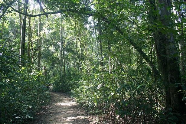 phu-quoc-trekking-path