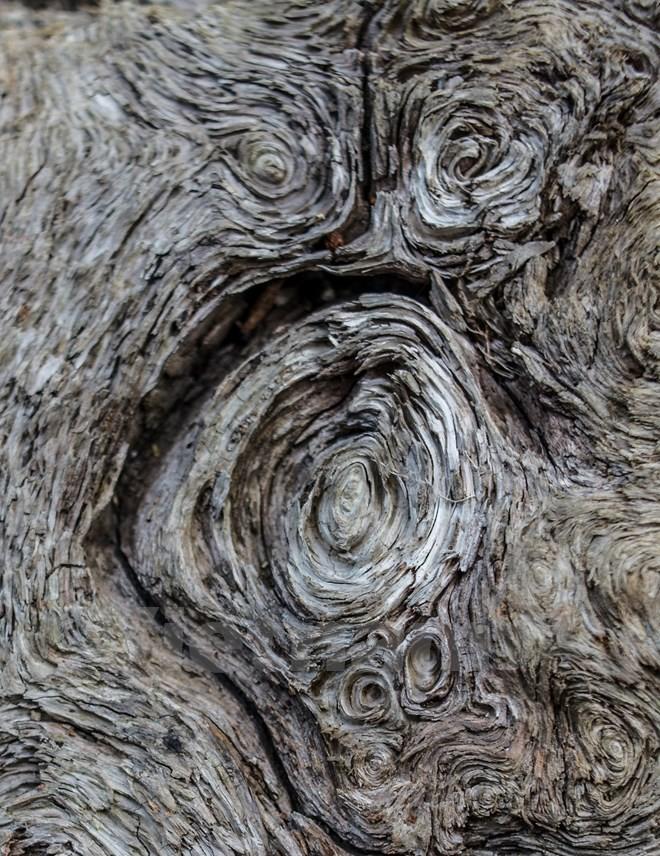 forest-pu-ta-leng