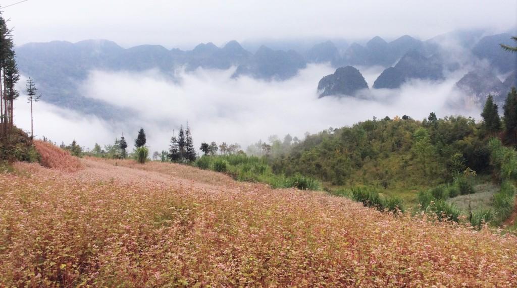 Flower fields on mountain