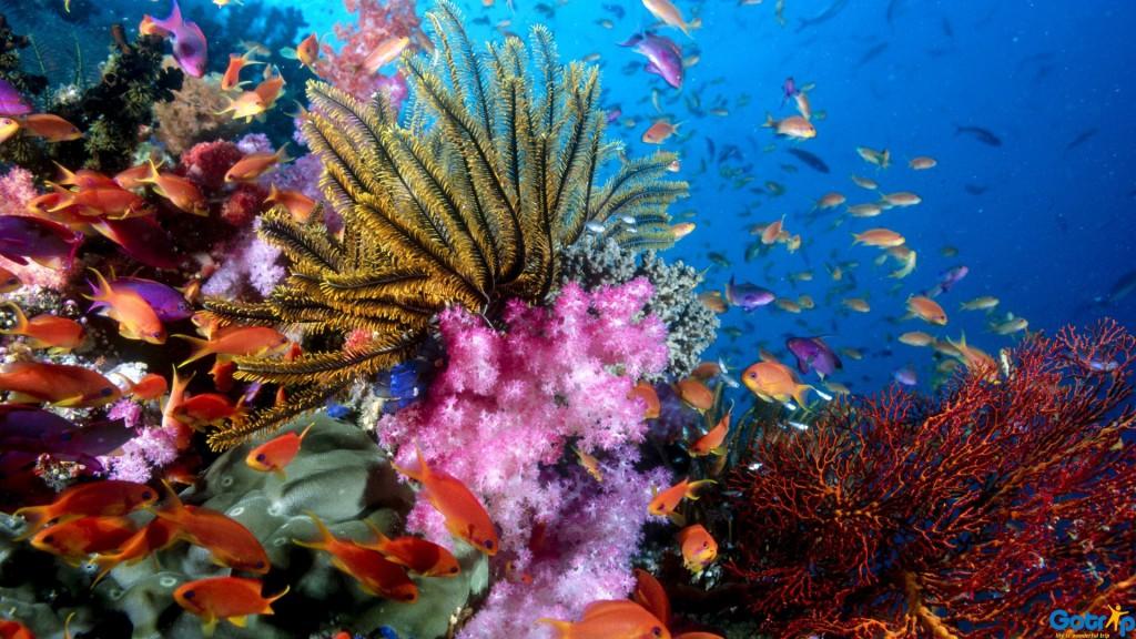 nha-trang-coral