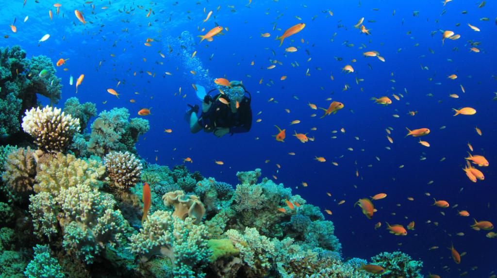 scuba-diving-in-nha-trang