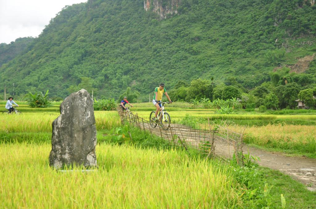 cycling-puluong