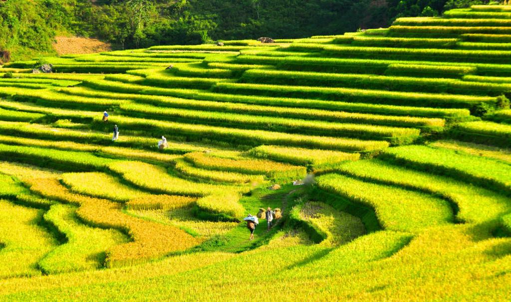 pu-luong-crops