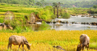 pu-luong-waterwheel