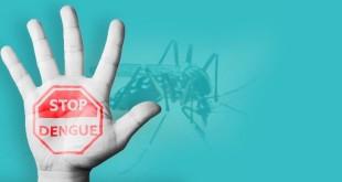 stop-dengue